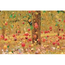 """""""Яблочный бум"""". Автор: Panali"""