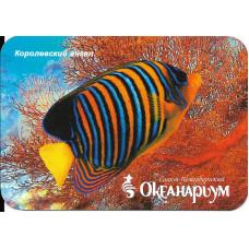 """Карманный календарик """"Океанариум, Санкт-Петербург. Рыба """"Королевский ангел"""""""