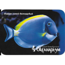 "Карманный календарик ""Океанариум, Санкт-Петербург. Рыба ""Хирург синий белогрудый"""