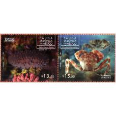 Мексика. Морская фауна. Сцепка