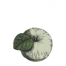 """""""Флора России. Сорта яблок. Белый налив"""". Дизайн: Still Hobby"""
